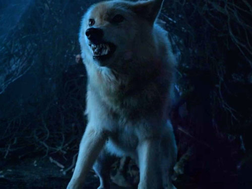 summer game of thrones direwolf