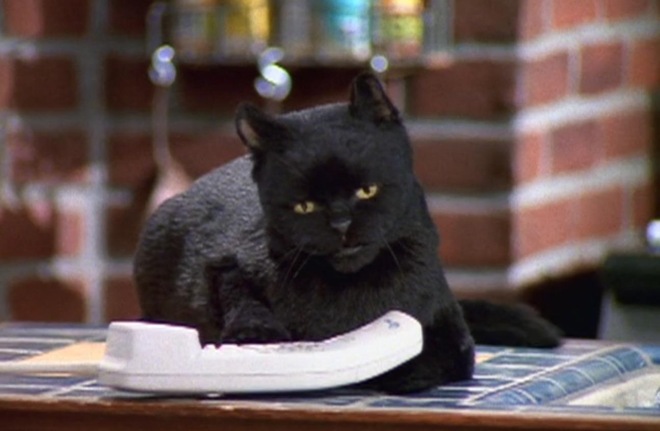 Salem the cat Sabrina