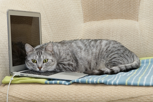 cat17.jpg