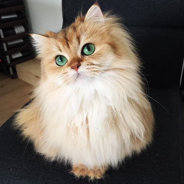 Picture of Smoothie the Cat