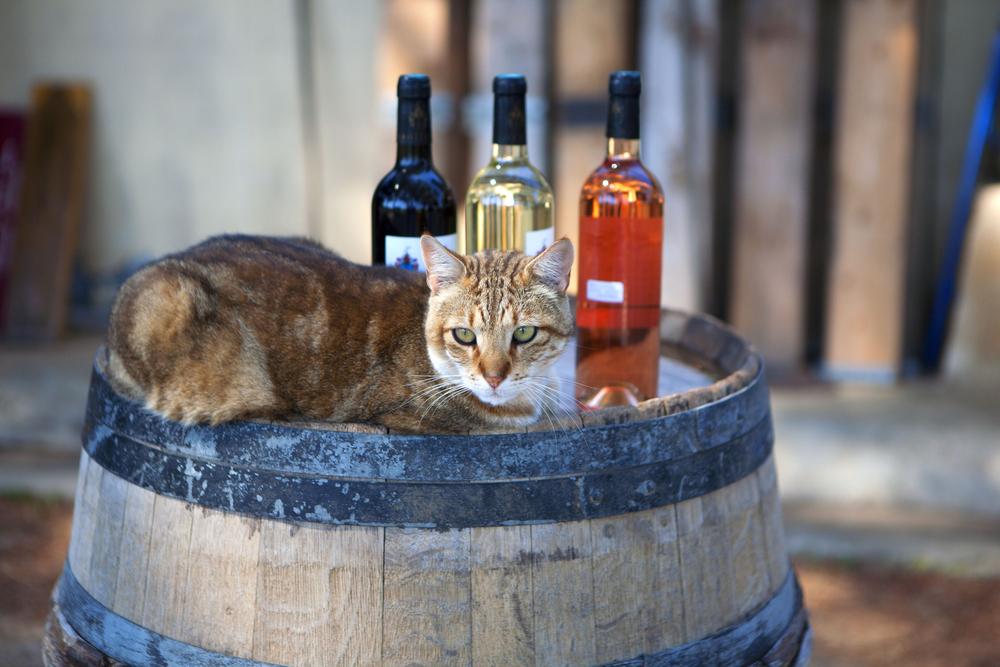 cat bar