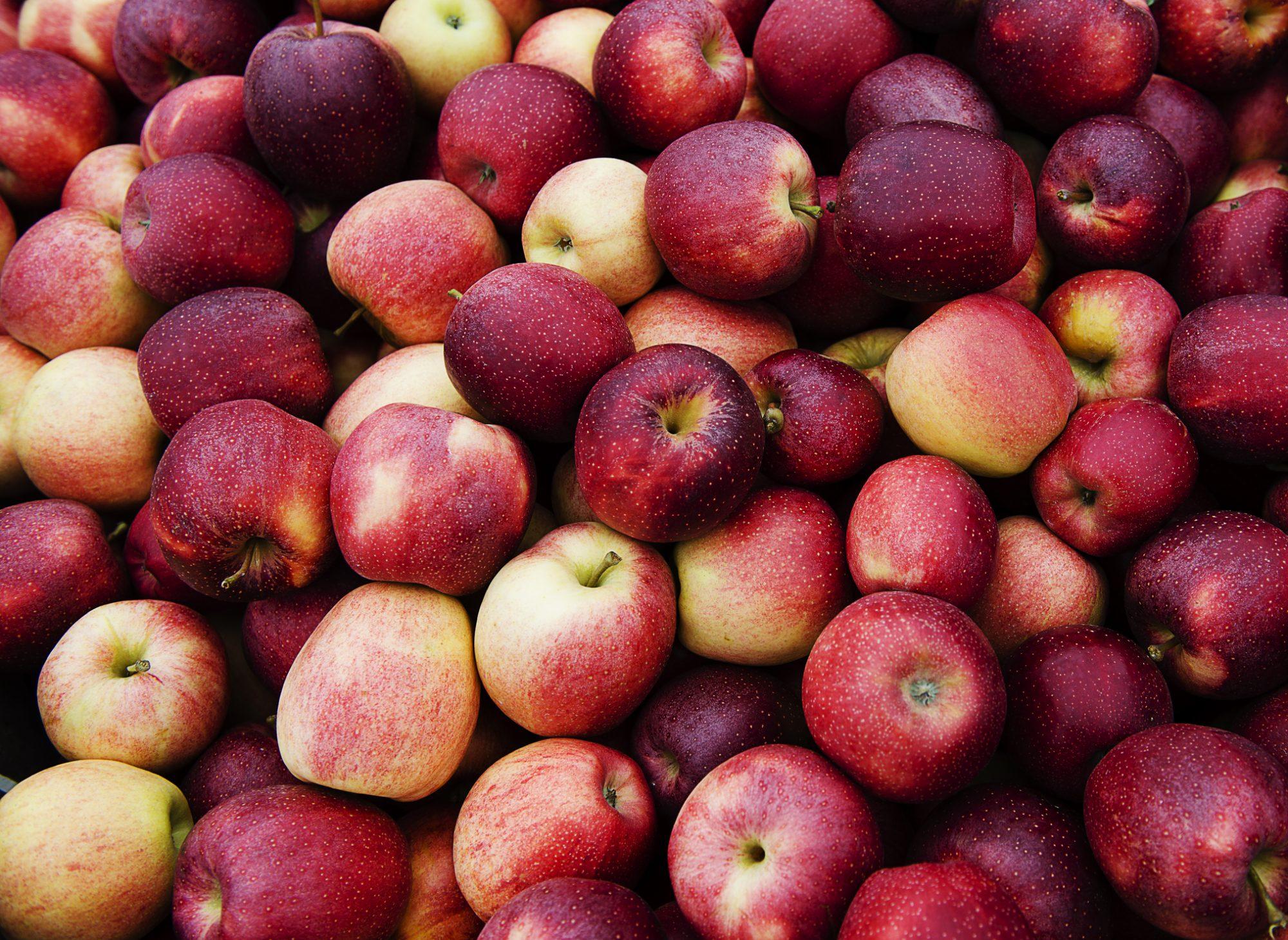 Macintosh apples for sale