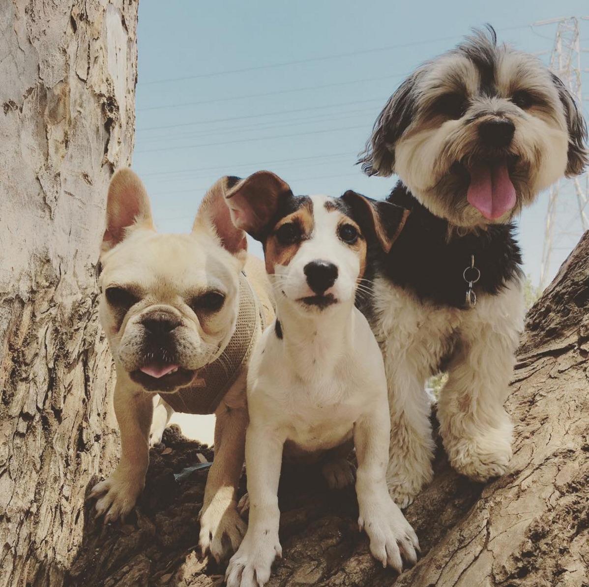 duffdogs