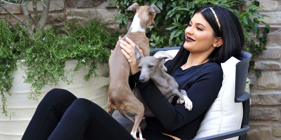 Picture of Kylie Jenner Dogs