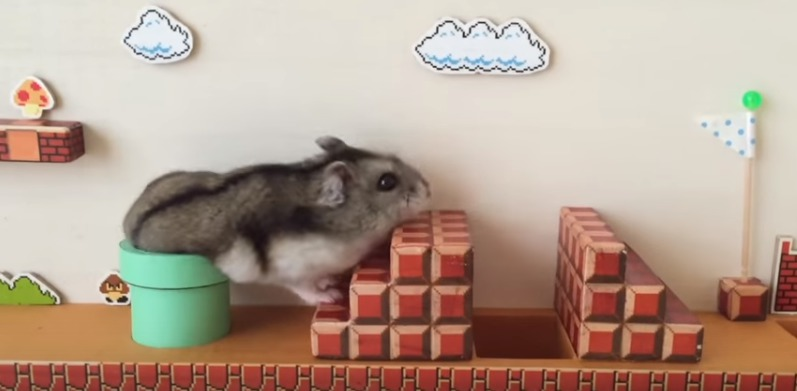 Hamster keeps playing