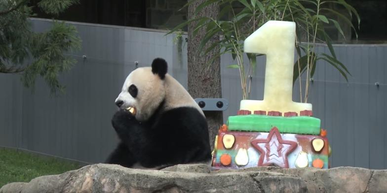 Panda-Apple.jpg