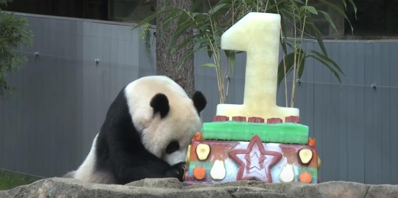 Panda-pawing-cake.jpg