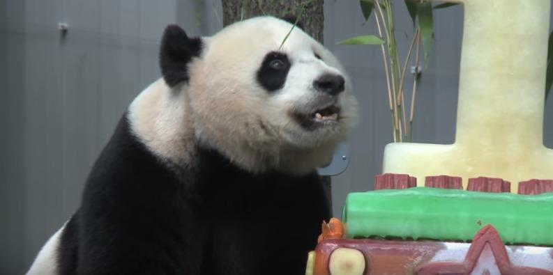 panda-checking-out-cake.jpg