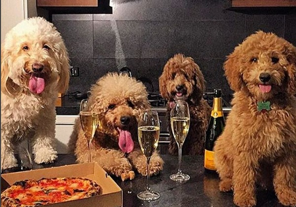 dogs-who-brunch