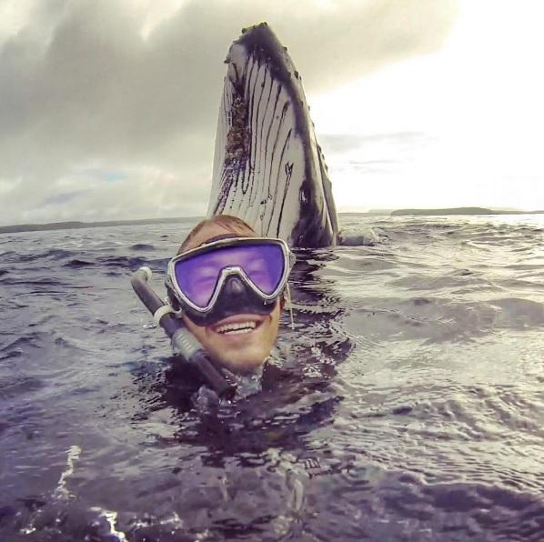 whale photobomb