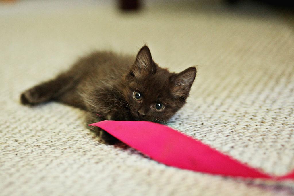 kitten-cover