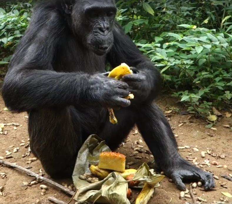 chimp-purse.jpg
