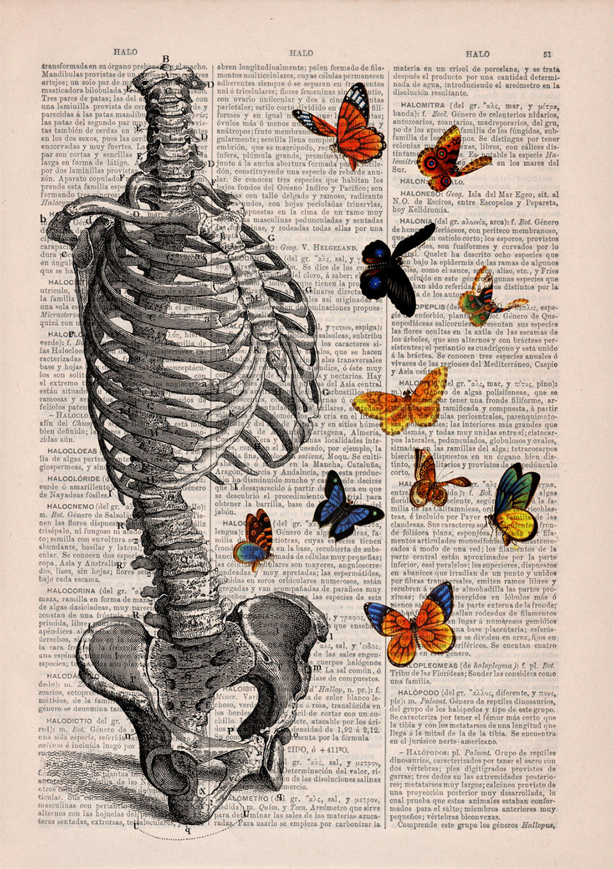 anatomy-illustrations-old-book-pages-prrint-18