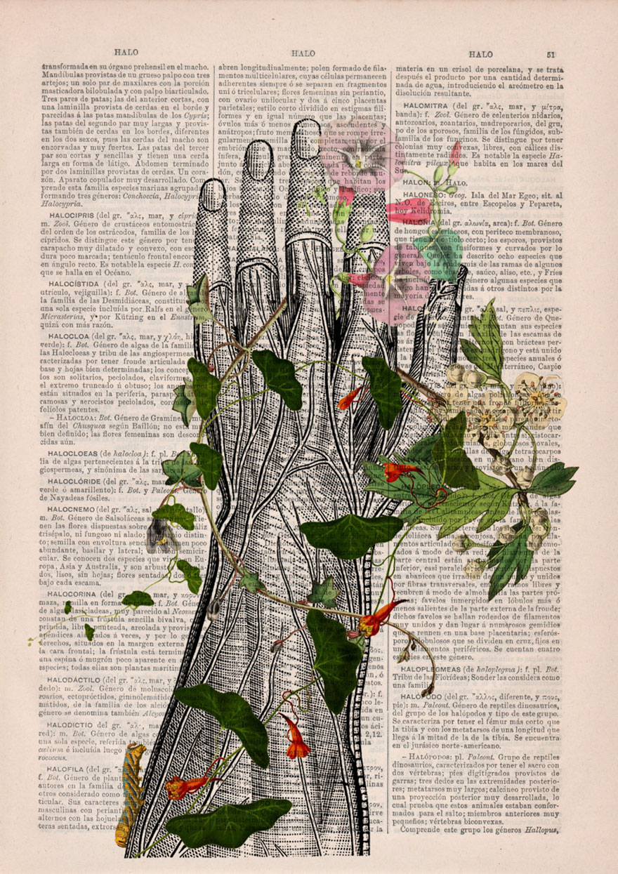 anatomy-illustrations-old-book-pages-prrint-19.jpg