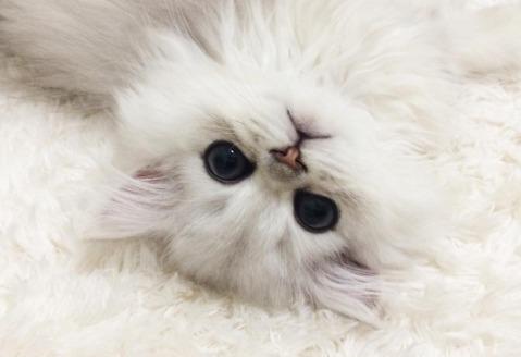 Picture of Hanachan Cat