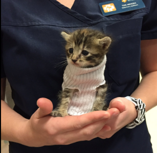 turtleneck kitten