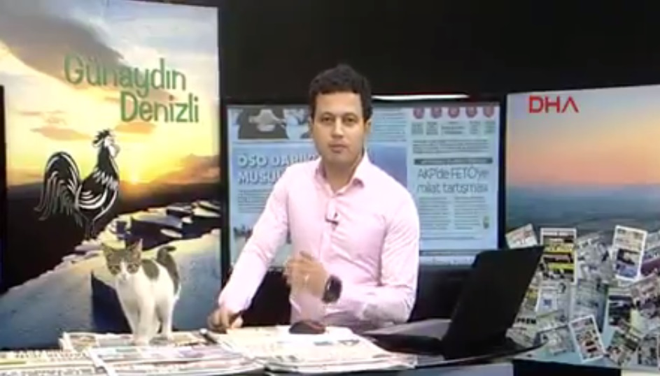cat-crashes-news-broadcast