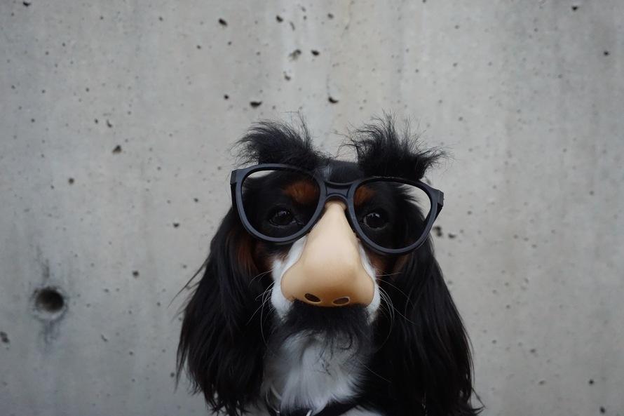 dog-in-costume