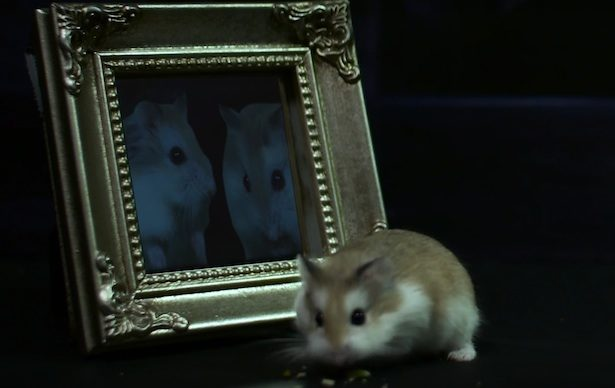 mirror-hamster-potter-615x388