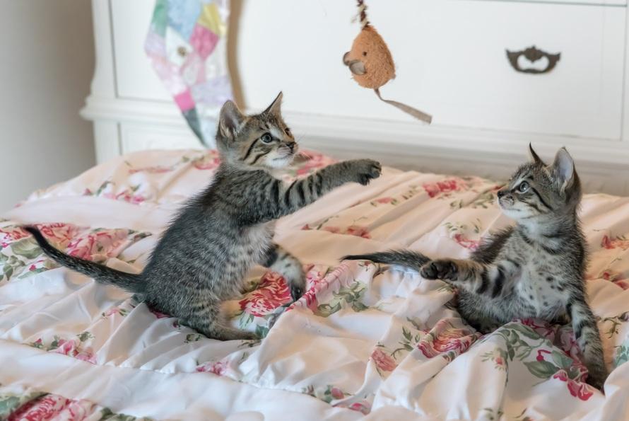 pexels-kittens-cats