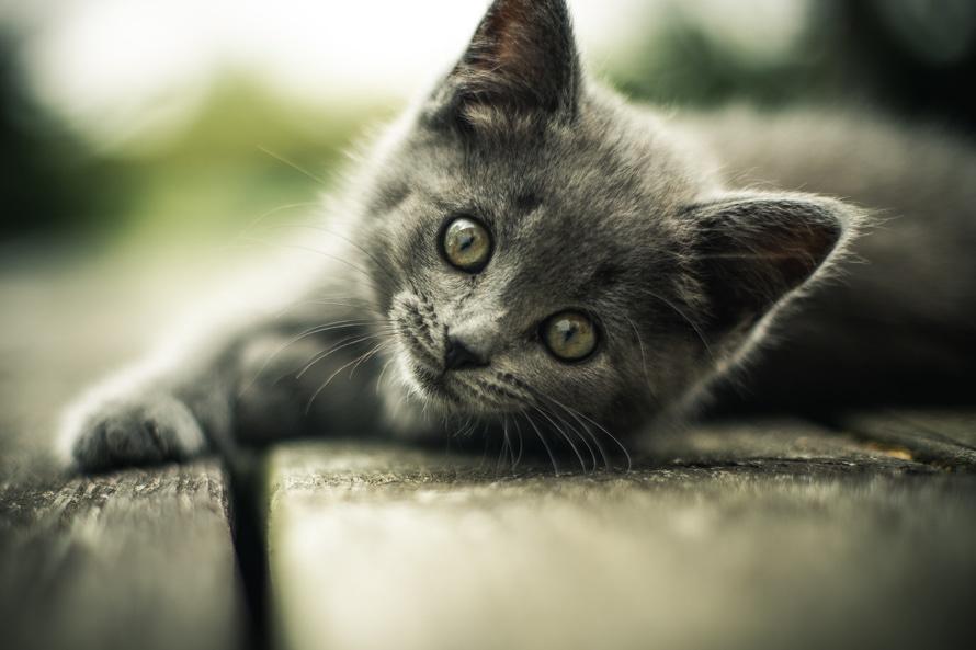 little-kitten-instagram