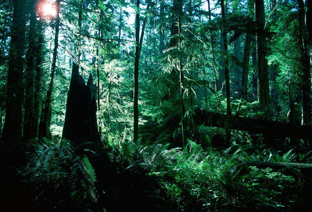 Macmillan Provincial Park, Canada