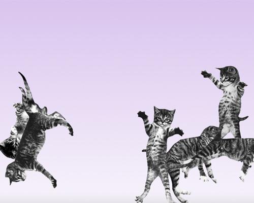 cat-bounce.jpg
