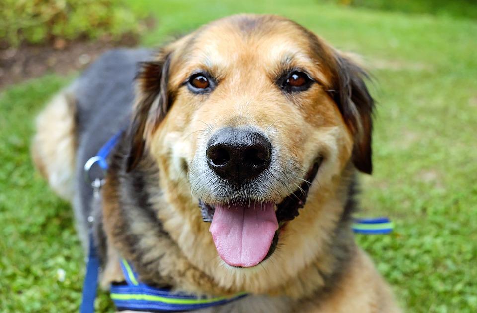 dog-cute-roadie
