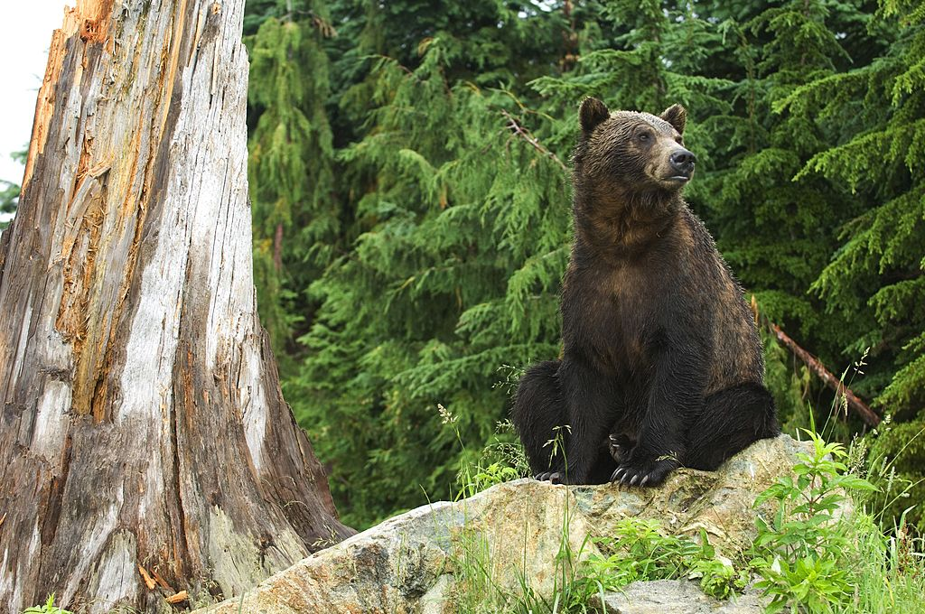 Canada, British Columbia, Vancouver, Grouse Mountain,
