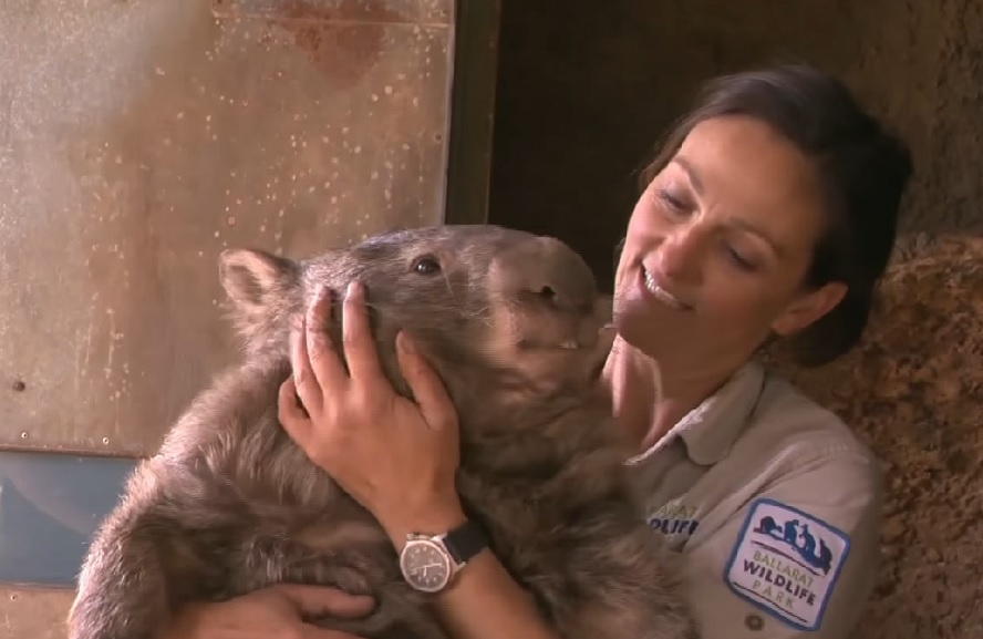 patrick-the-wombat