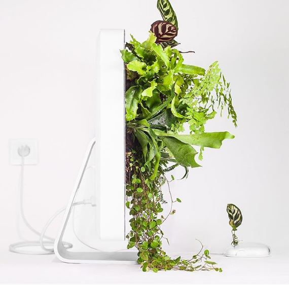 plantyoumac