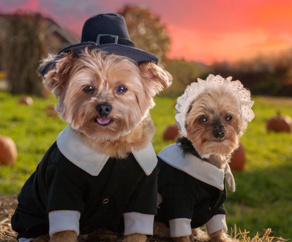 cute-dogs