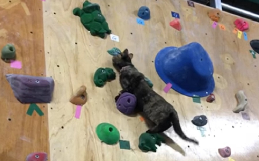 cat-climbing-rock-wall