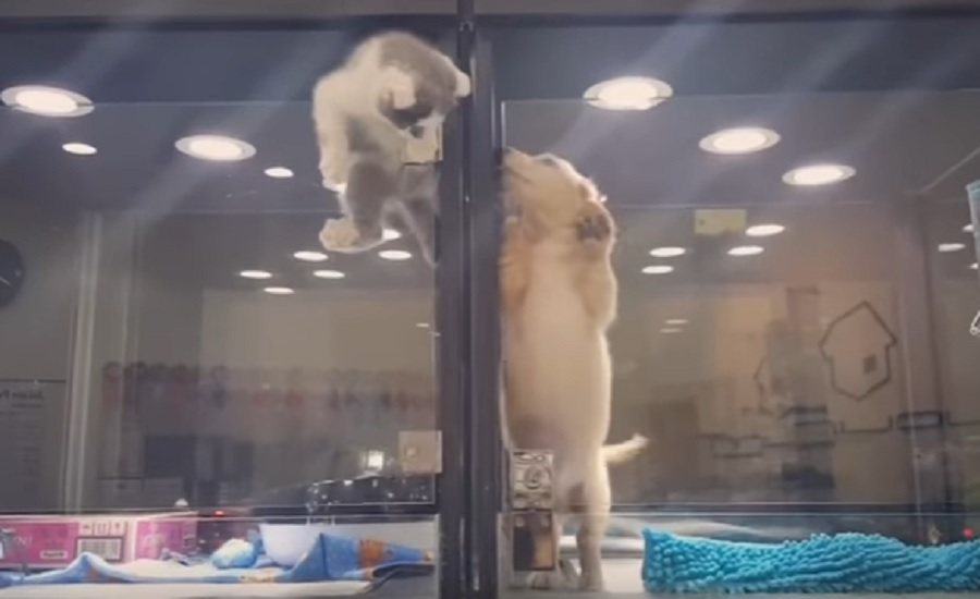 kitten-escapes-cage-to-play-with-puppy