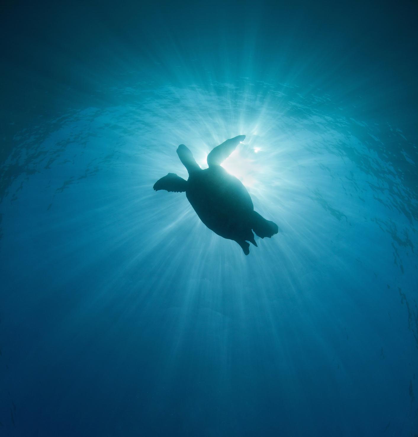 sunlight sea