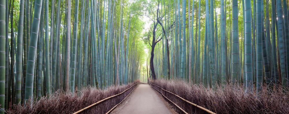 Japan, Kyoto, Arashiyama bamboo forest at sunrise