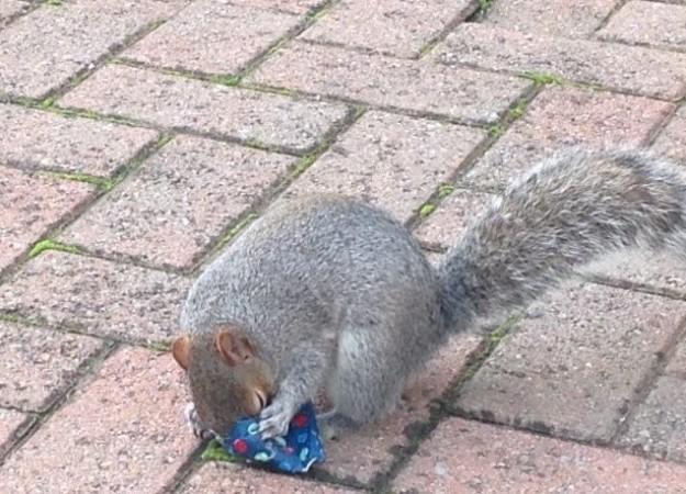 squirrel opening present