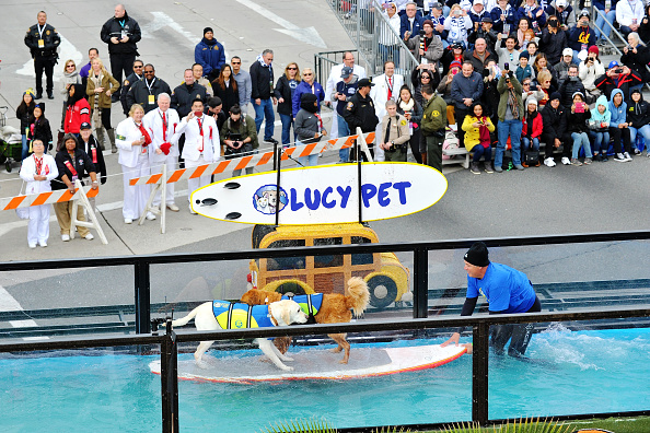 surfing dogs rose parade