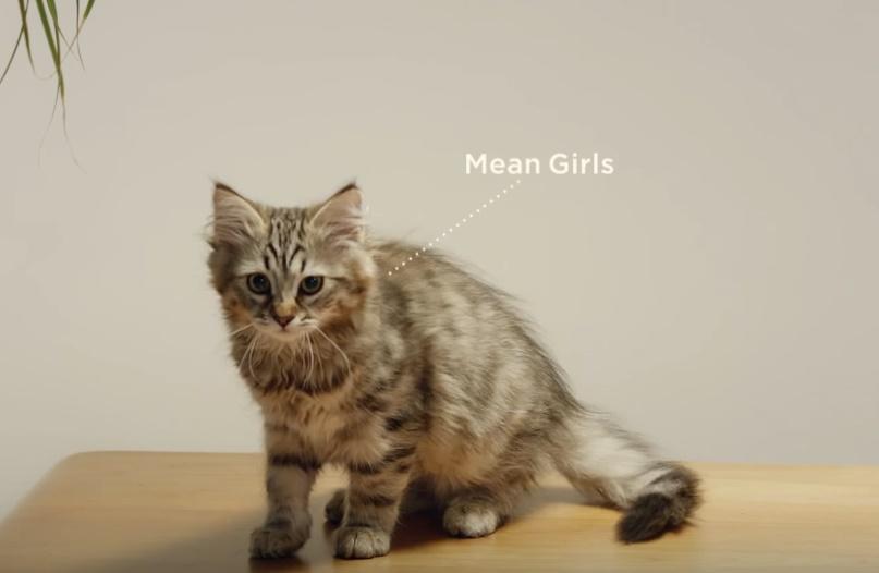 mean-girls-kitten.jpg