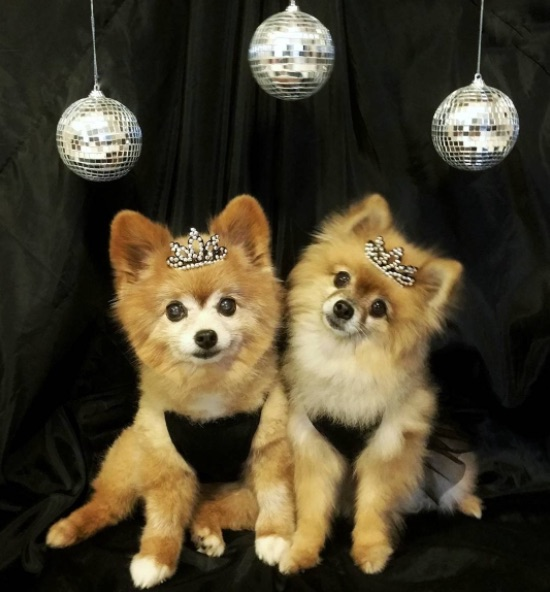 dogs-new-years-eve