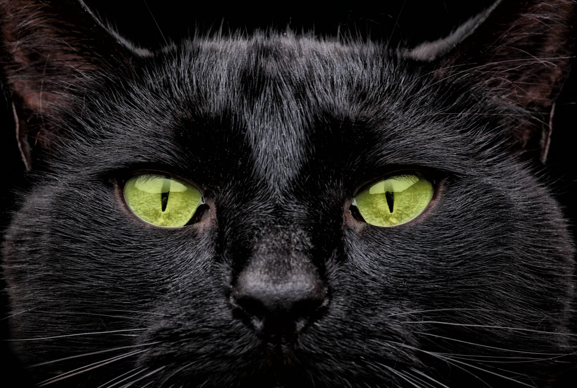 Friday the 13th black cat