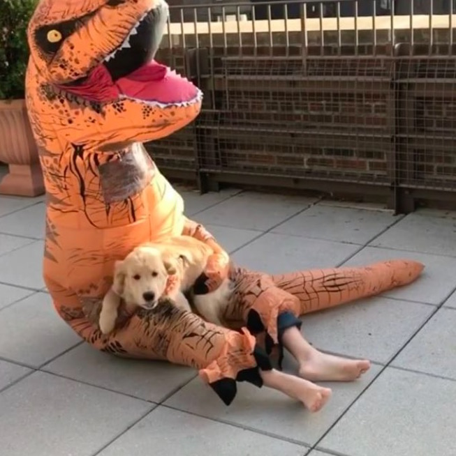 Dog and his human in a T-rex suit.