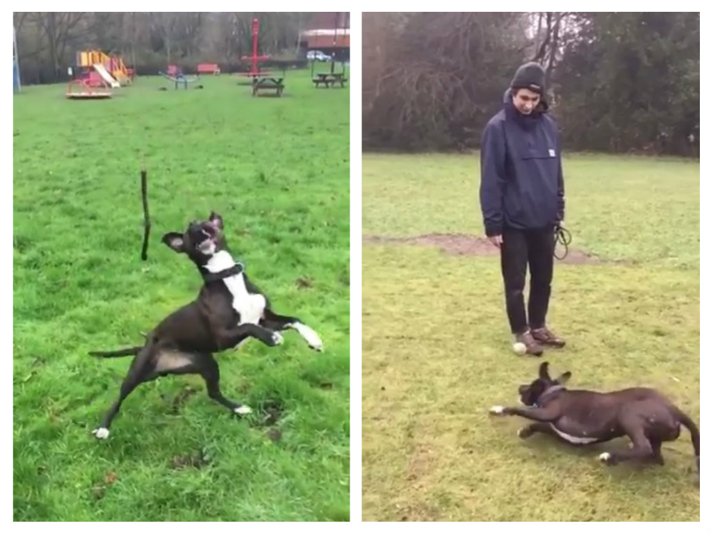 zelda-dog-fetch-fails