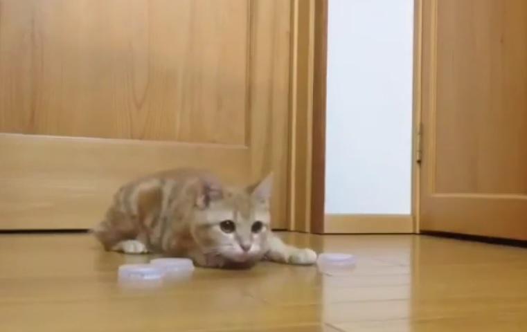 cat-hockey-reddit