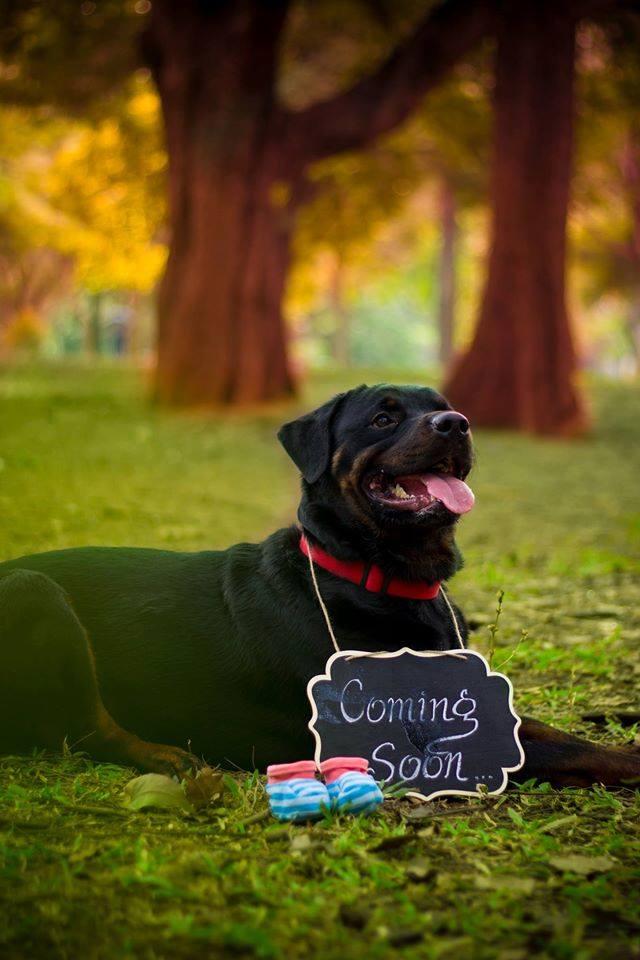 dog maternity photoshoot