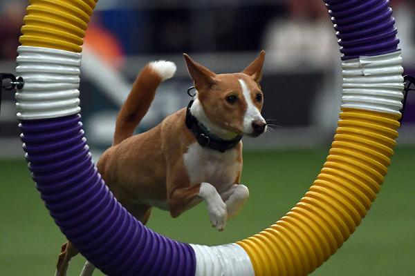 doggie jumping