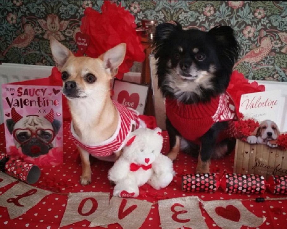 dogs on valentines day