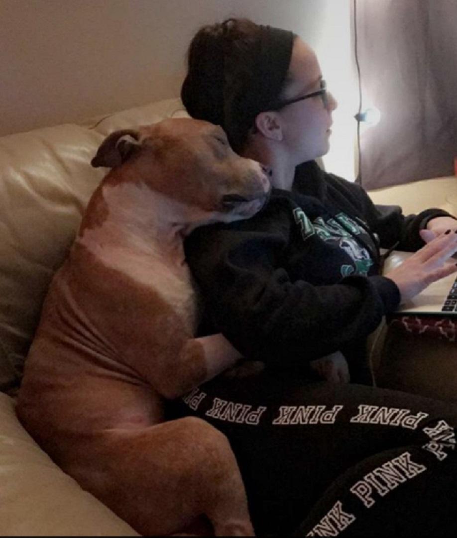rescue dog hugging new owner