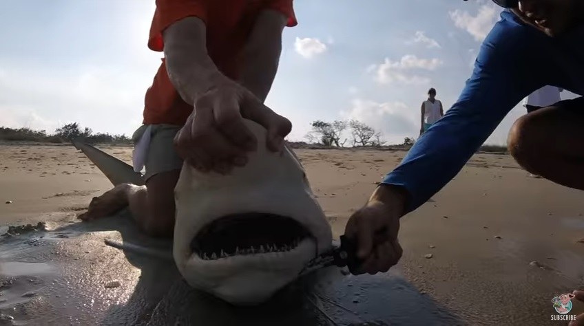 guy-frees-shark-from-fishing-line.jpg