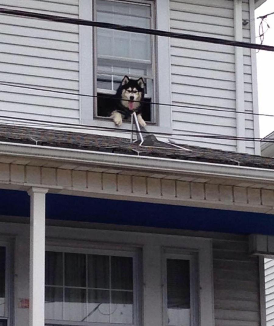 dog climbed on roof
